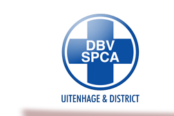 SPCA | Cats | Dogs | Pets | Animal Welfare | Animal Shelter | Uitenhage | Despatch | Port Elizabeth | South Africa